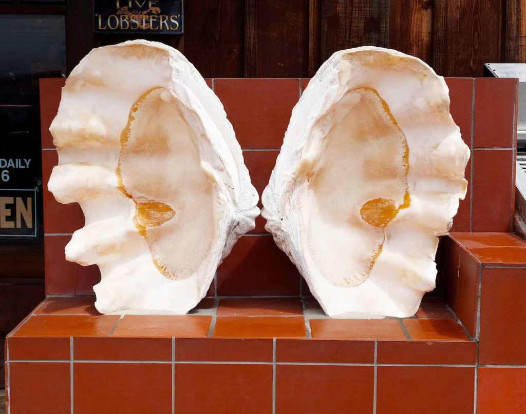 Giovannis - Oyster Shells