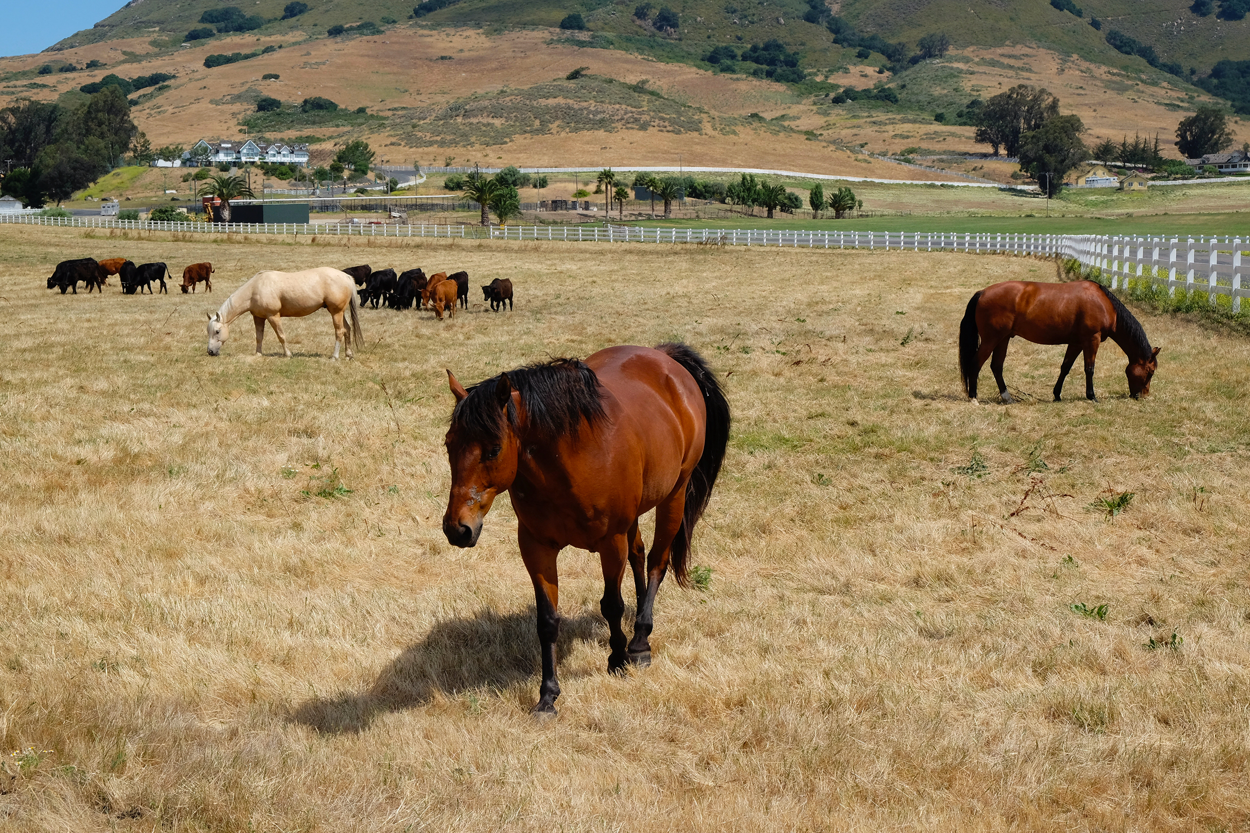 Madonna Inn Trail Rides - Horses